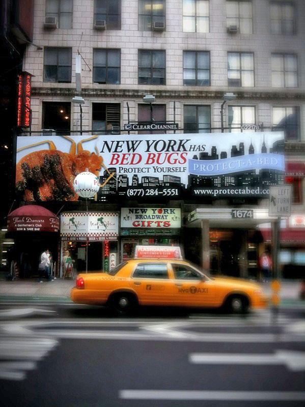 Bed bugs New York (Foto: Flickr/Devyn Caldwell)