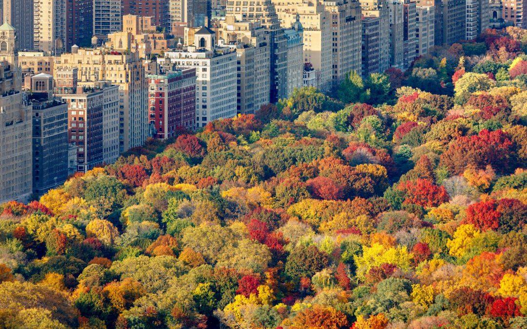 Central Park i höstfärger