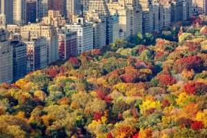 Central Park in Fall (Foto: Dollarphotoclub/Francois Roux)